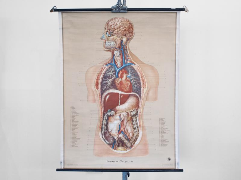 Ruempelstilzchen | Schulwandkarte | Innere Organe